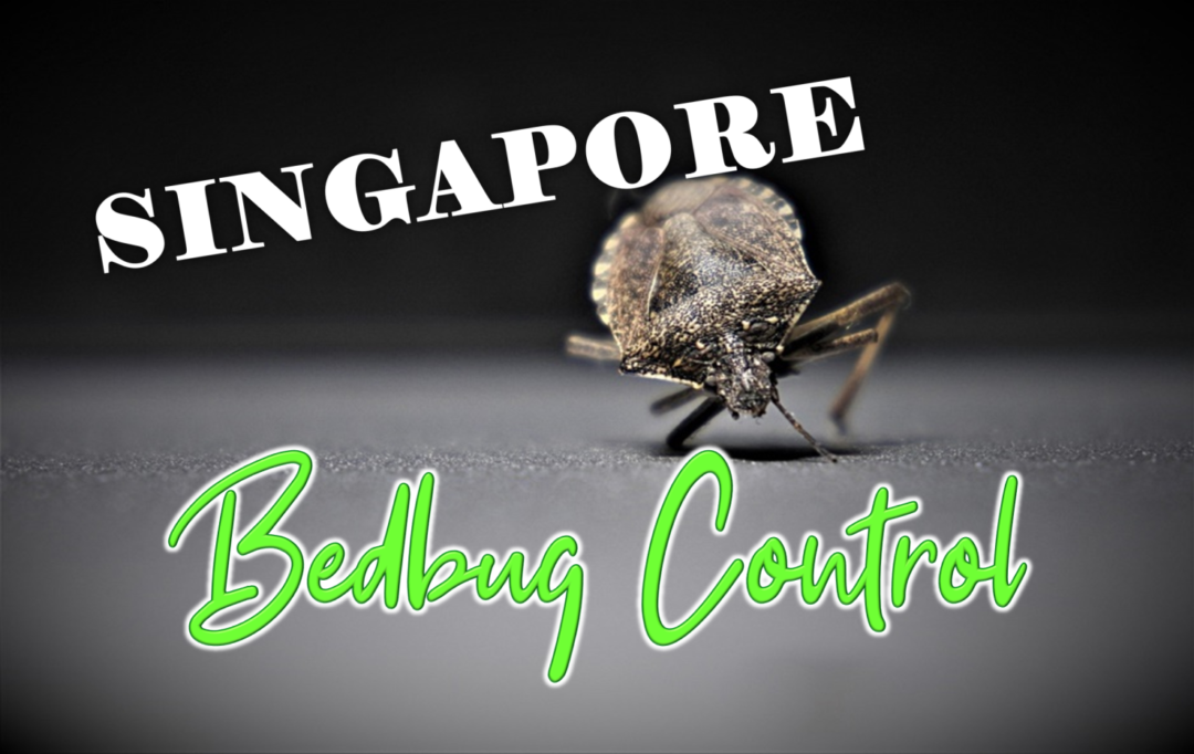 Best Bed Bugs Control Singapore